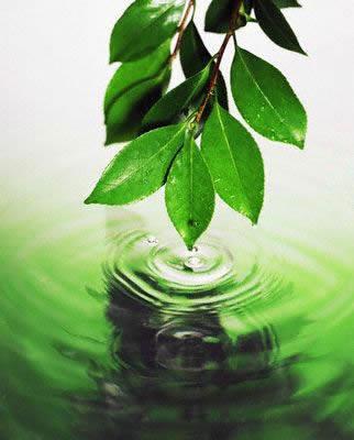 Essential Oils Plant