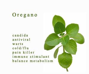 Oregano Benefits