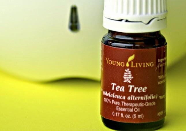 Young-Living-Tea-Tree