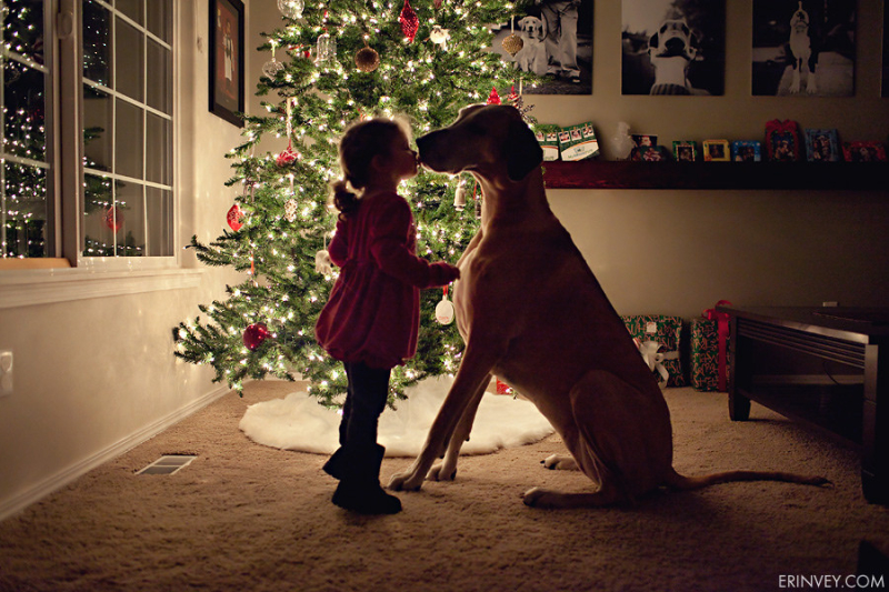 Merry Christmas little girl and her dog