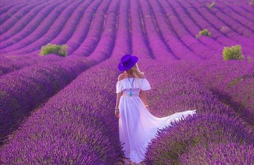 Woman Lavender