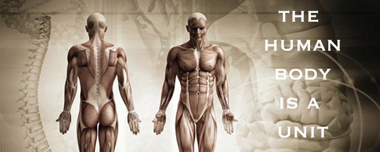 Osteopathy-anatomy-banner